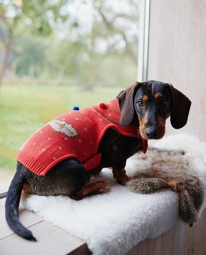 Rode kersttrui voor honden